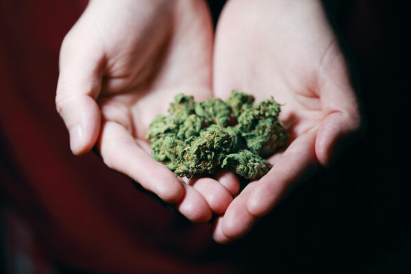 Hands that are open holding cannabis